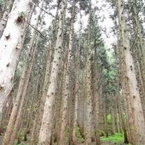 当館前の森
