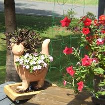 テラスの猫鉢