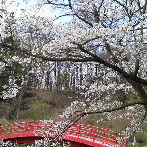 長者屋敷公園の桜