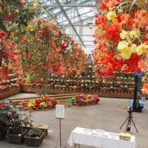 *【ベゴニアガーデン】なばなの里で人気のフラワーエリア!キレイなお花を観賞できます。