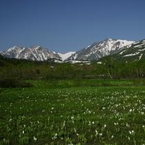 栂池自然園:春