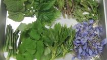 *【山菜料理】野山で摘んできた山菜を下処理