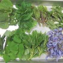 【山菜料理】野山で摘んできた山菜を下処理