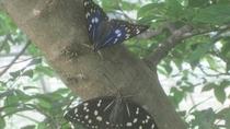 *【オオムラサキ】美しい蝶も見られます