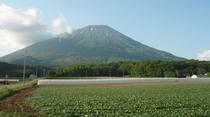 夏の羊蹄山。富士山によく似た整った姿から、蝦夷富士とも称されています。