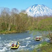 【ラフティング】緑に萌える羊蹄山や川面の自然が美しい、比較的穏やかな川の流れの夏コース