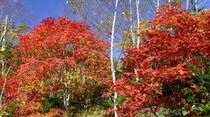 【紅葉】当館周辺の散策路でも、紅葉をお楽しみいただけます