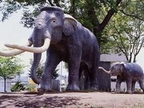 ナウマン象博物館