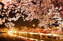 高田の花見