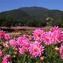 秋の黒姫高原