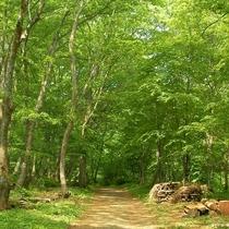 アファンの森 入口