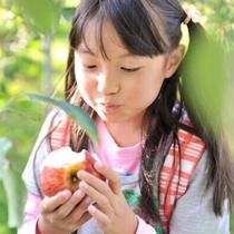 原田農園 りんご狩り