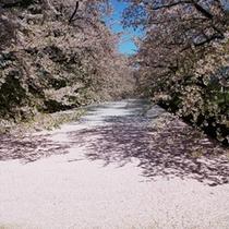桜の花びらジュータン