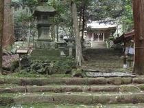 l八幡宮来宮神社 本殿 杉に囲まれたお宮様