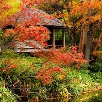 秋の牛池散策