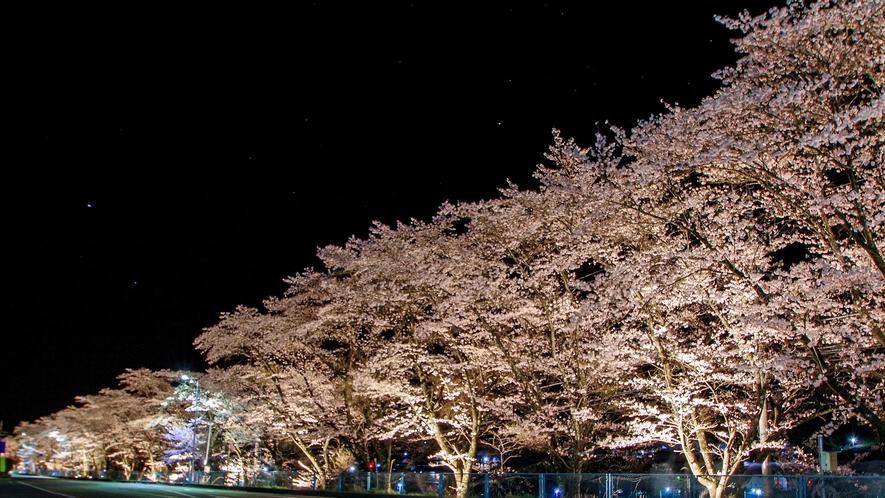 【三原夜桜】ホテルより車で約30分
