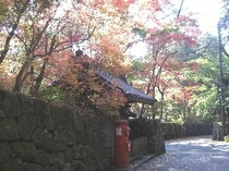 東観荘周辺の紅葉