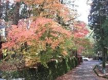 東観荘正門付近の紅葉