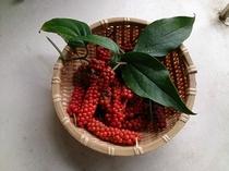 庭で採れた胡椒の実