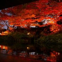 【雫石高倉温泉】夜の紅葉ライトアップ