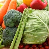野菜イメージ キャベツ