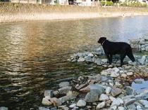 看板犬『みなみ』は 水が苦手♪