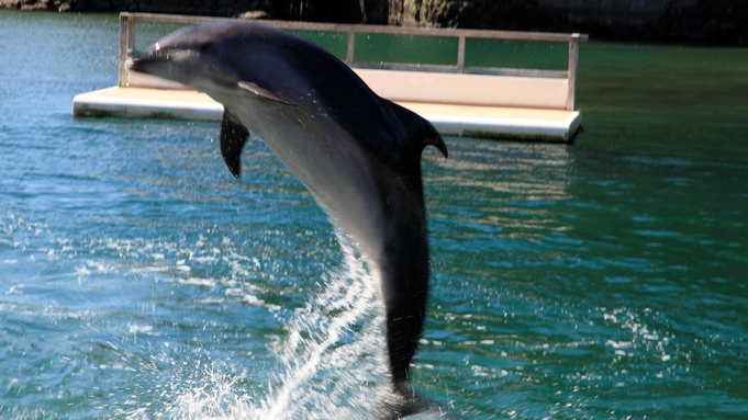 【ファミリー・カップルにおすすめ】添い寝無料|イルカと遊ぼう♪下田海中水族館チケット付きプラン