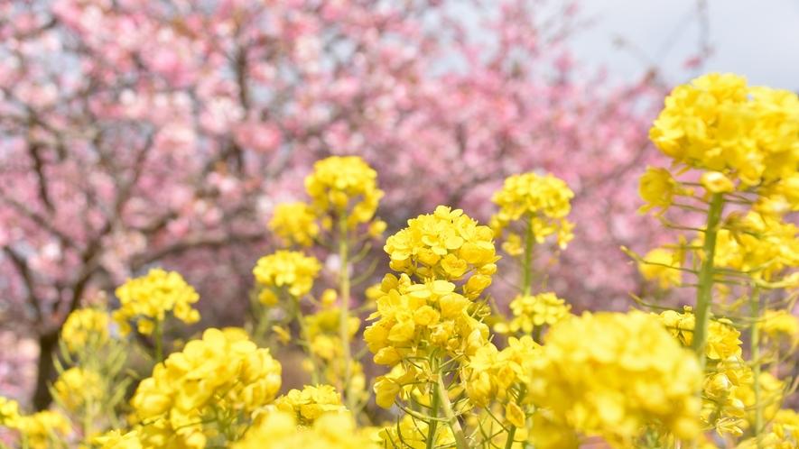 周辺観光|河津町の河津桜