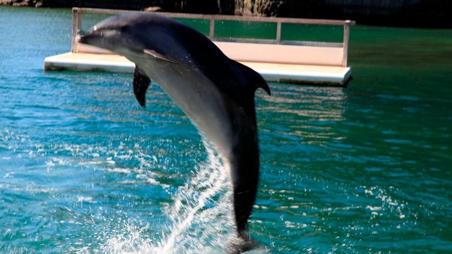 周辺観光|下田海中水族館