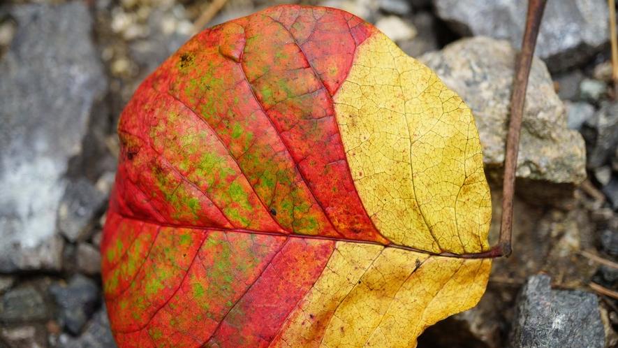 ・津黒の秋のグラデーション