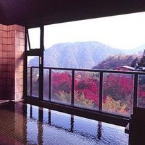 *大浴場(紅葉シーズンの眺望)