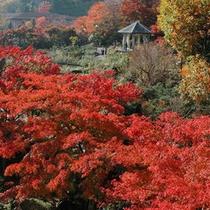*大浴場からの景色(秋・11月)