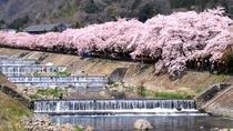 【宮城野早川堤】早川沿いの堤約600mにわたり、約120本のソメイヨシノの桜並木となっています。