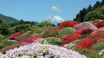 【つつじ】小田急・山のホテルでは、毎年5月ごろに約30種3000株のツツジをご覧いただけます。