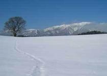 冬・小岩井一本桜