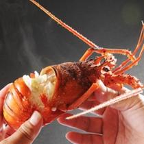 伊勢志摩を代表する高級食材「伊勢海老」