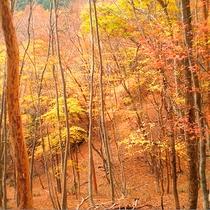 紅葉の総門山