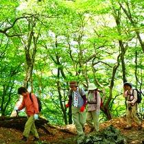 新緑の登山