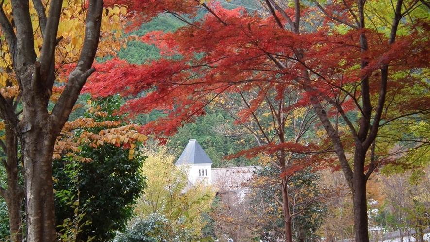 *当館周辺の紅葉