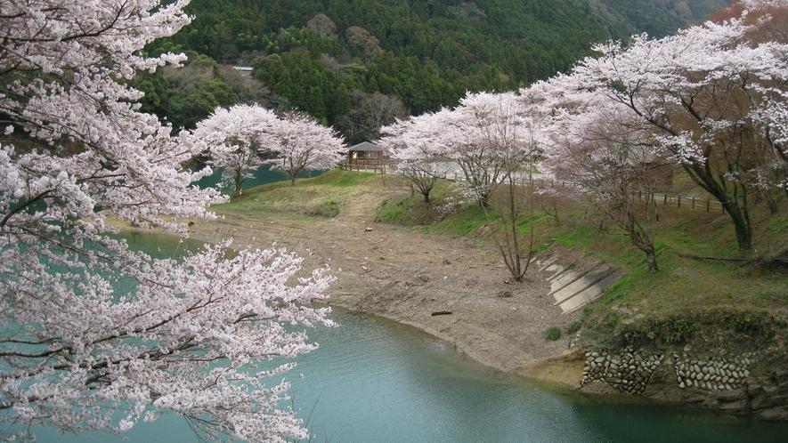 *桜の里公園