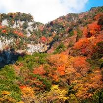 秋には燃えるような紅葉が広がります♪