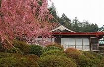松竹外観 桜
