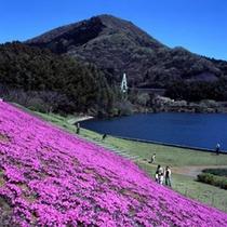 伊東の観光【奥野ダム】芝桜