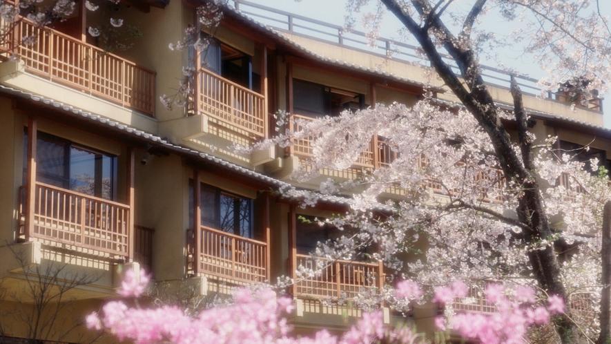 外観(桜が満開の春の風景)