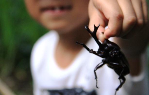 【夏休み限定】小学生以下 無料♪【昆虫採集ツアー】大人も楽しめる!1泊2食付【家族旅行応援】