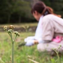 【わらび採り体験 無料】春の味覚