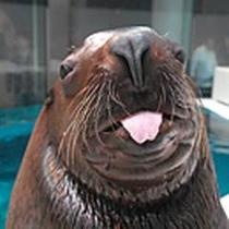 大分マリーンパレス水族館「うみたまご」は当館より車で15分