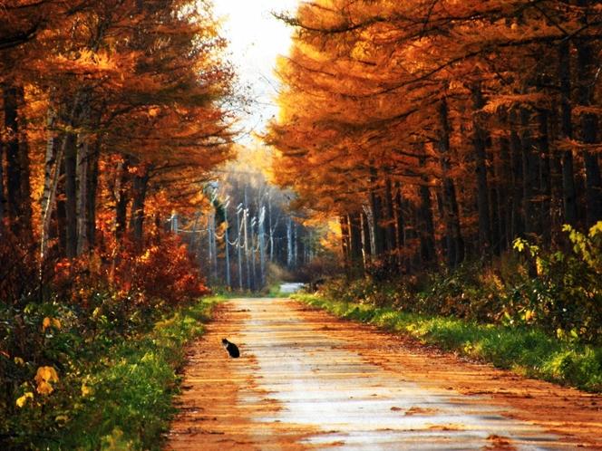 林道の紅葉