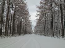 真冬の農道