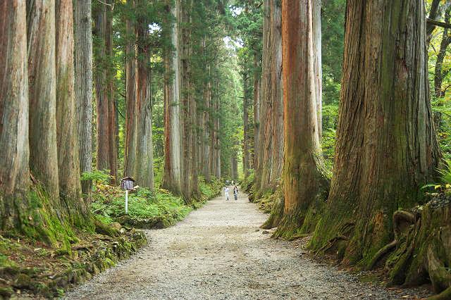 戸隠 奥社(車20分)パワースポットで人気。JRのCMで吉永小百合さんも歩きました